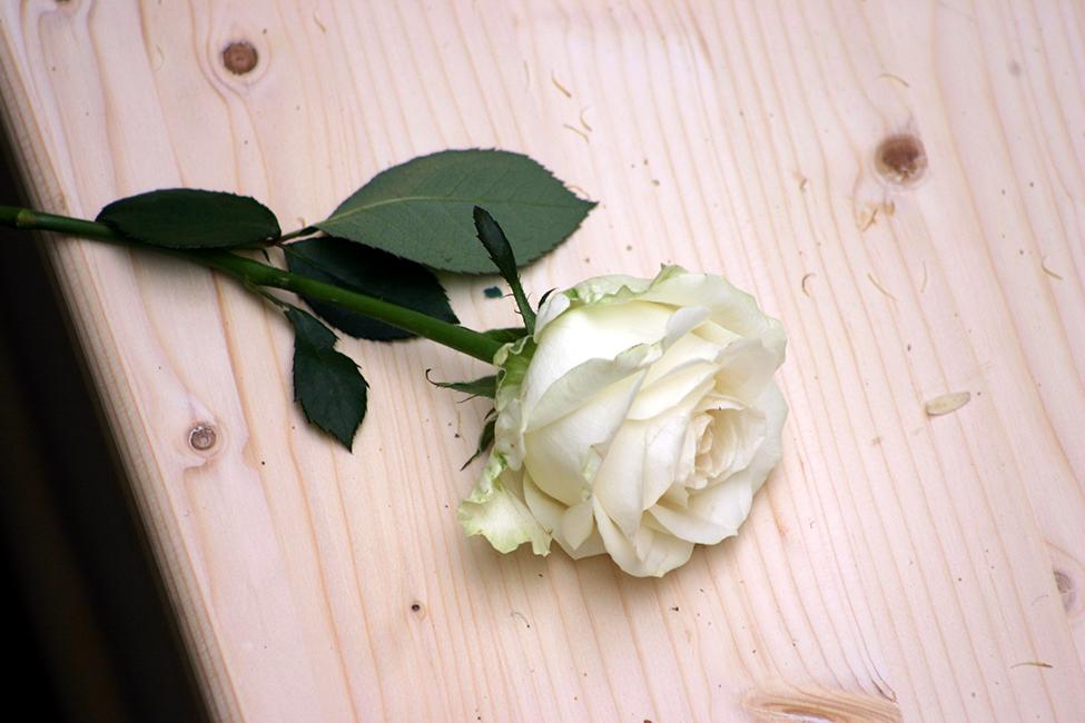 Jikke Uitvaartfotografie roos op kist